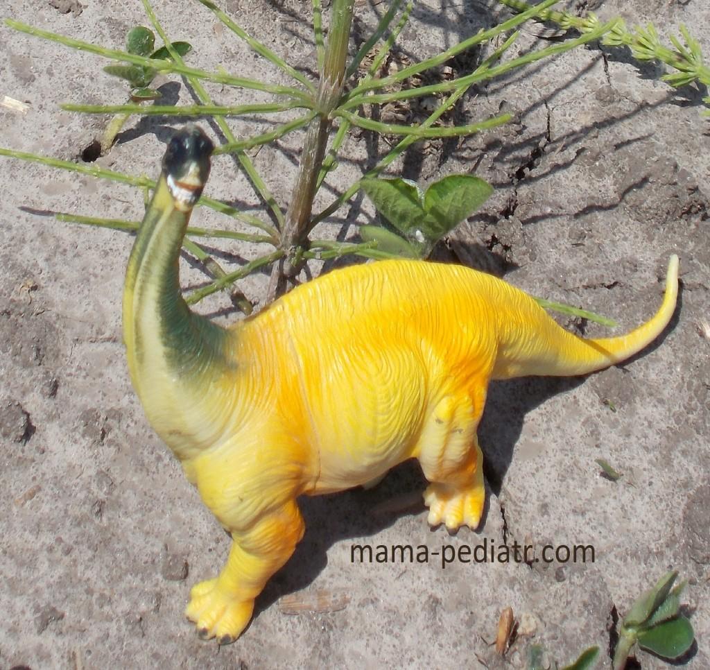 Знайомтесь, це — диплодок, травоїдний динозавр з Юрського періоду. Якби він жив зараз, міг би зазирати у вікно на 5-му поверсі.