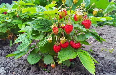 заразиться глистами можно, съев немытые овощи или фрукты